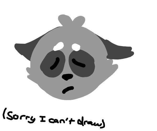 A sad raccoon