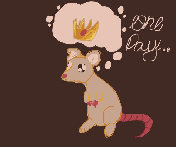 Rat dreams of being king