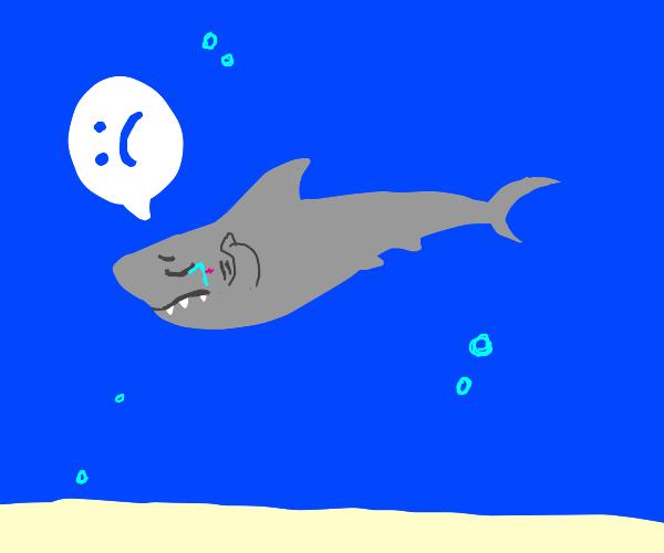 Sad shark :(