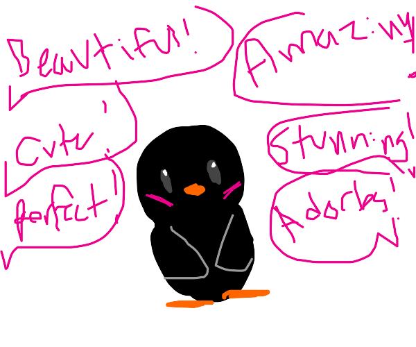 Everylone compliments cute black bird 10/10
