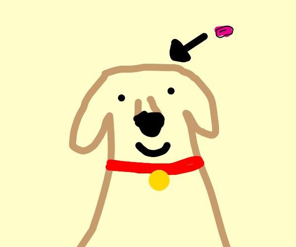 Happy dog has a tiny brain
