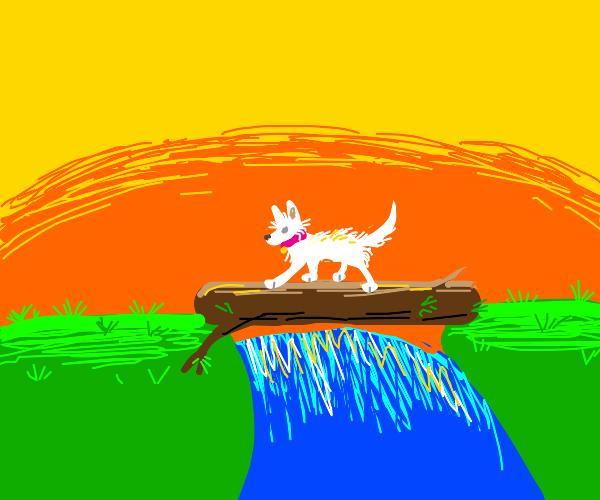 white dog crosses a log over a river