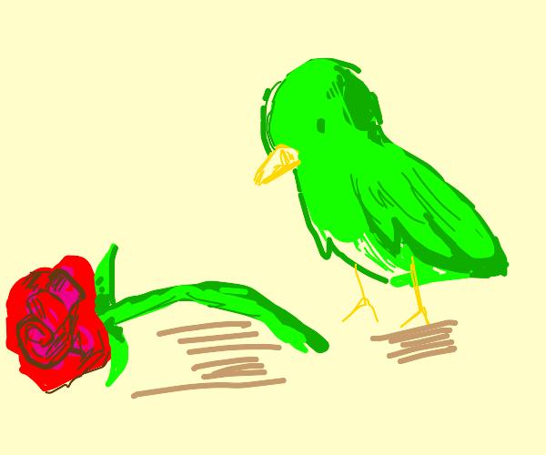 Green bird gives up rose