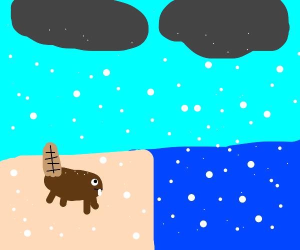 beaver by an ocean