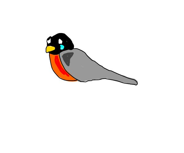 robin sucks