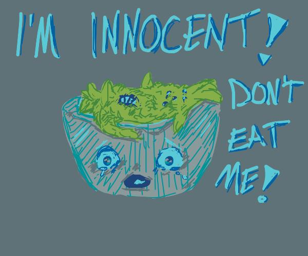 Salad plays innocent
