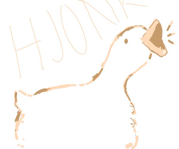 Hjonk