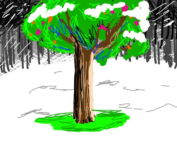 Lone flowering tree in winter.