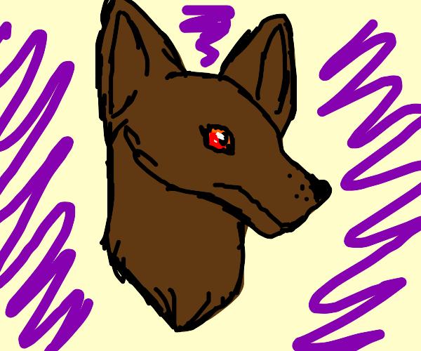 brown dog/wolf