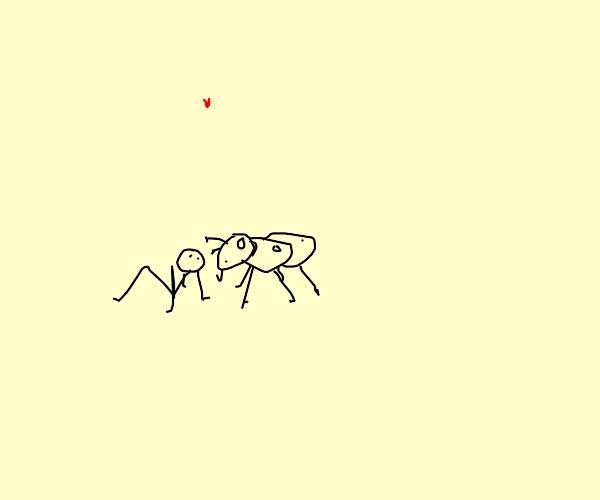 shrunken man loves an ant