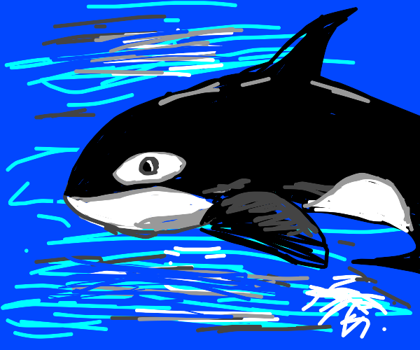 Orca in the wild