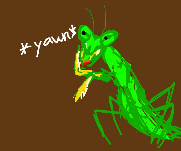 Praying Mantis Yawning