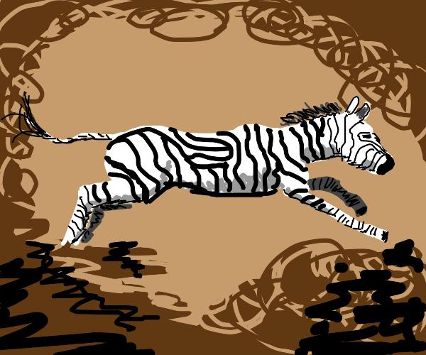 A Zebra walks across a desert