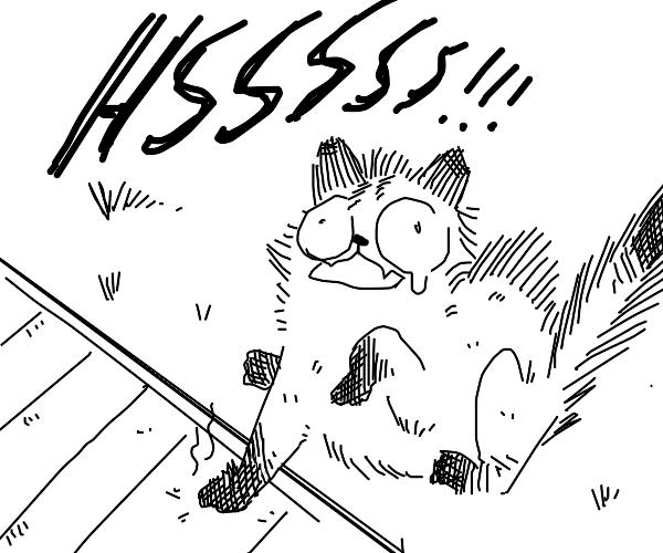 cat burns paws on sidewalk :(
