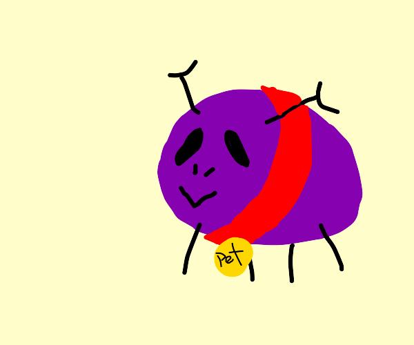 Pet Alien Grapes