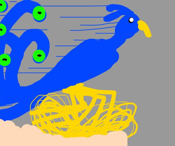 Peacock + Roadrunner