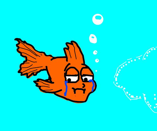 Orange fish in water sad, invisible fish near