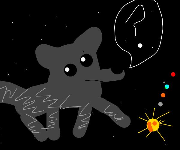 Wolf runs acorss the universe