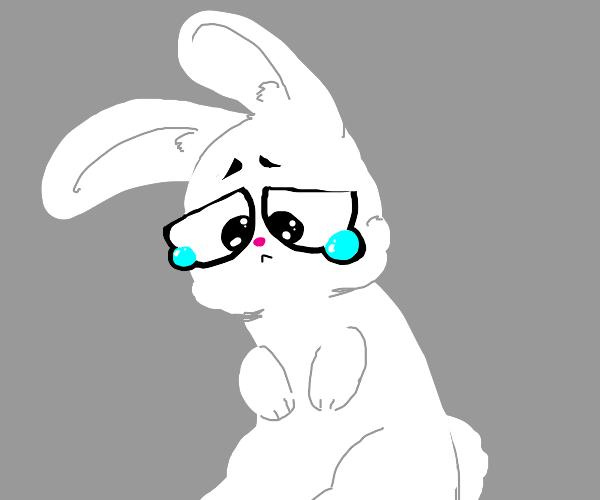 a sad bunny