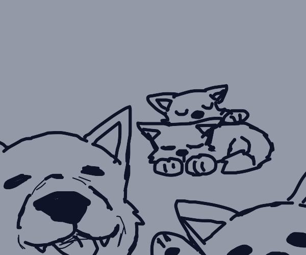 A litter of wolf pups!