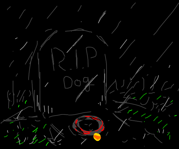 My dog died today. :(