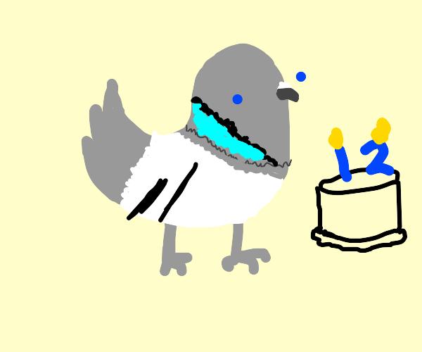 a pigeon turn 12