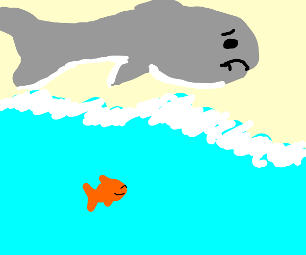 Sad beached whale sees happy goldfish