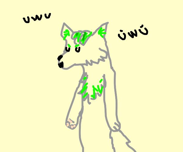 Furry with uwu stuff