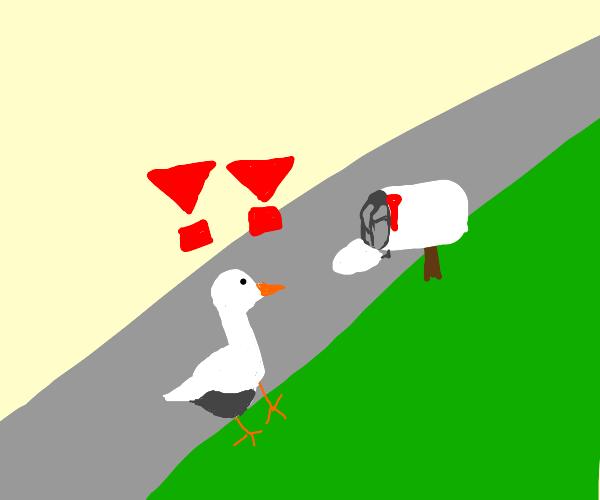 Goose found a mailbox