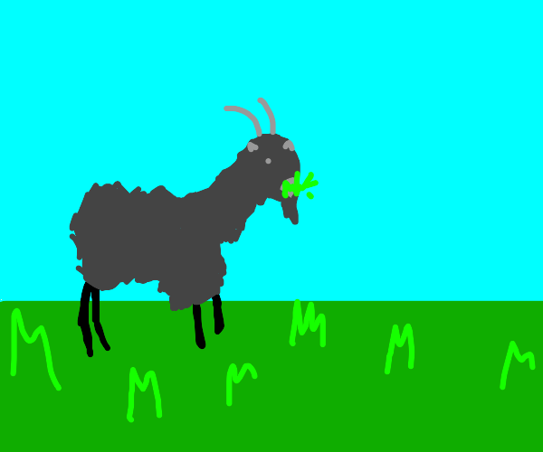 Grey goat eats grass