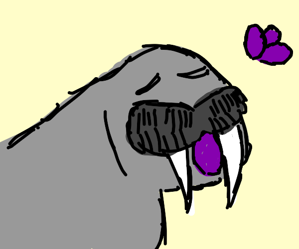 Walrus eating purple eggs