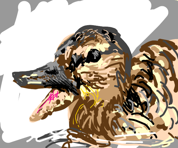 Distressed Duck