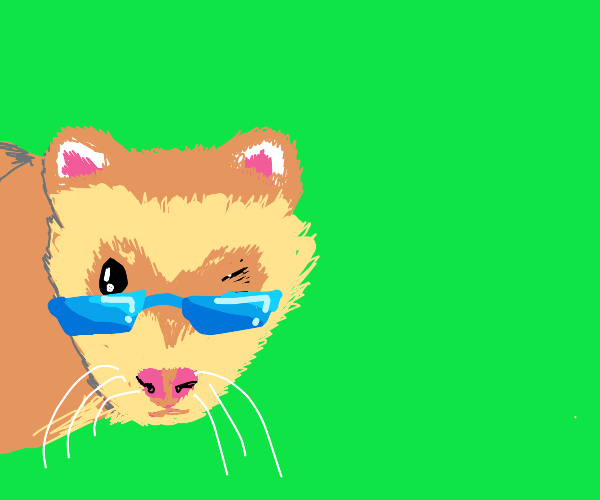 just one cool ferret