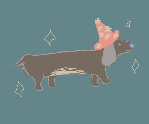 a wizard dog