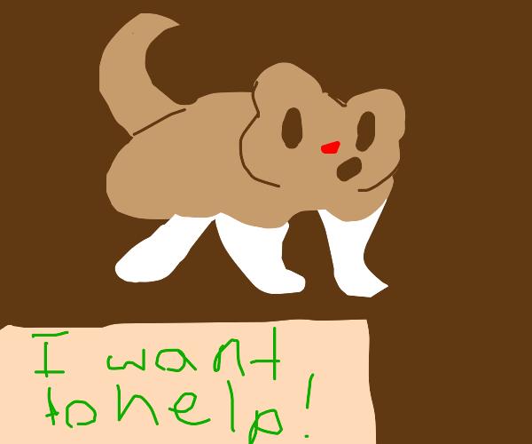Hamster dog wants to help