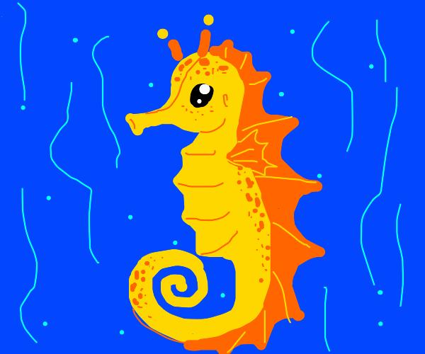 Sea horse i guess
