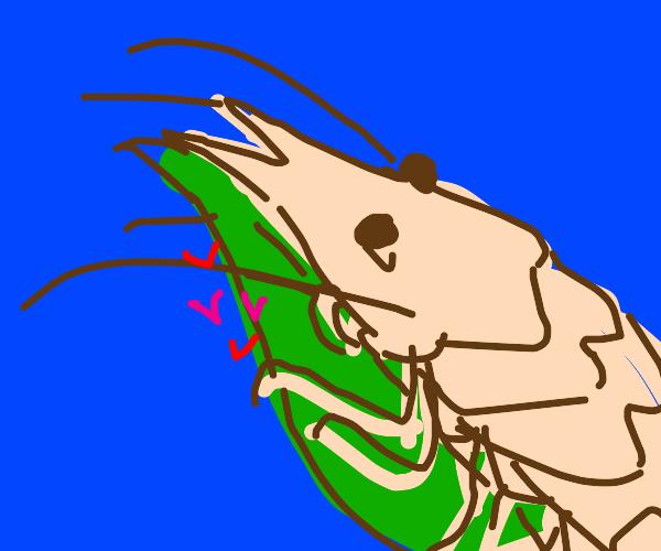 Shrimp loves leaf