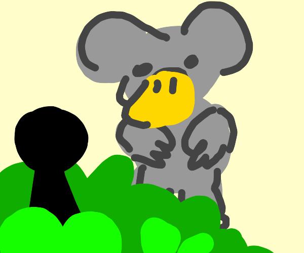 Ambushing the duck-billed koala