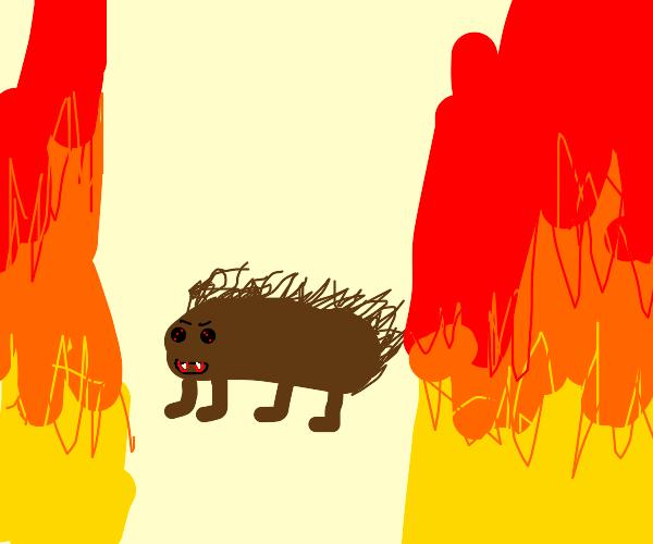 devilish hedgehog