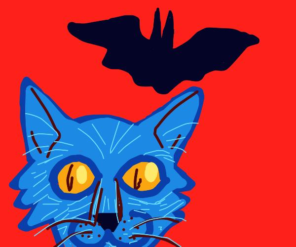 A cat and a bat