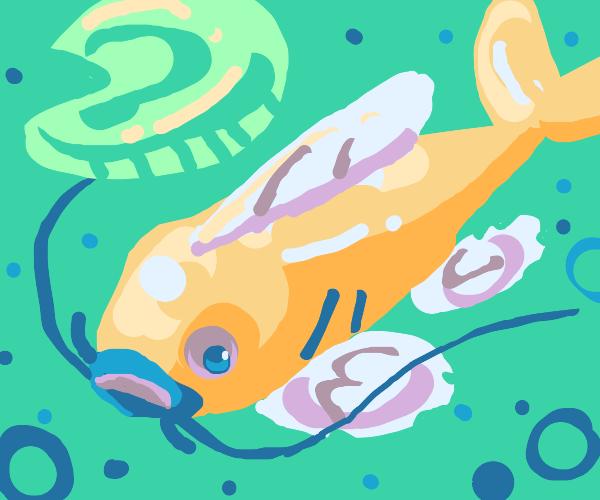 elegant catfish