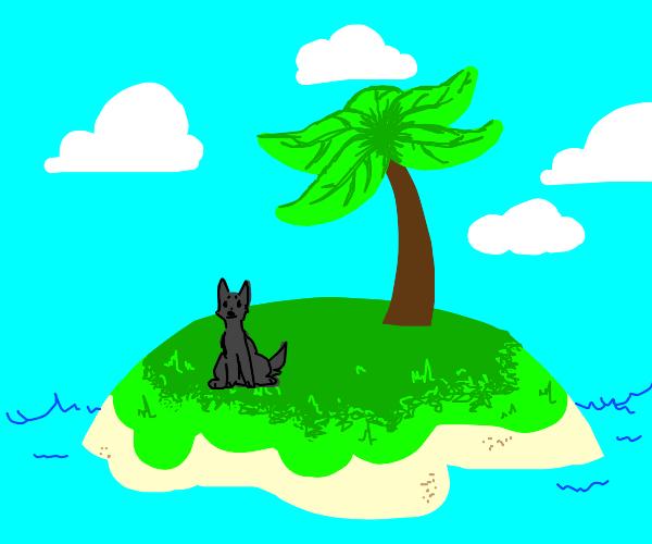 Dog alone on a island