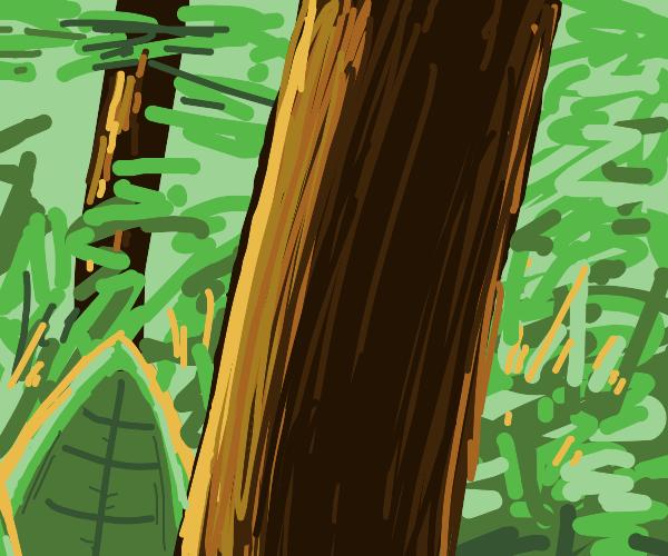 Closeup of an epic tree trunk.
