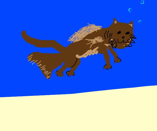 literal cat-fish