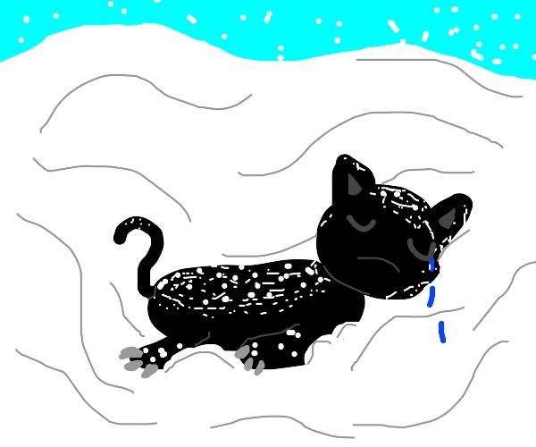 sad cat in the snow