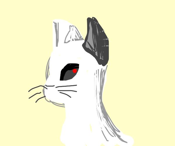 cyborg cat