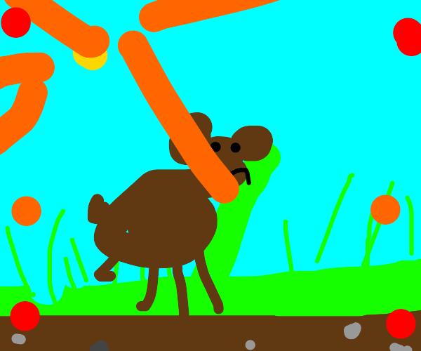 Bear in grass