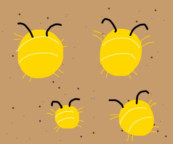 Round Yellow Bugs