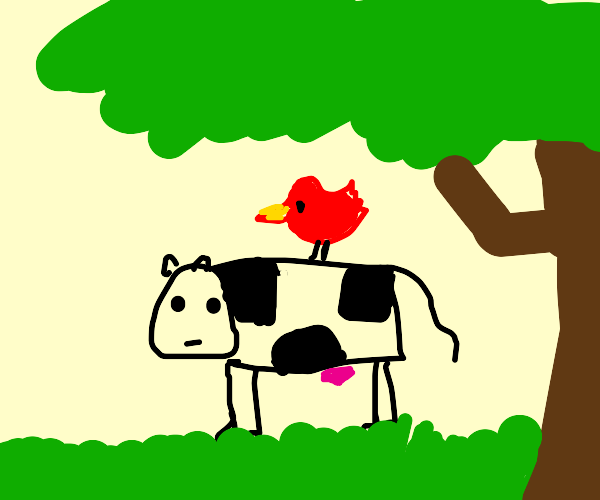 Red bird sitting on a cow under a trees shade