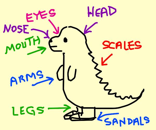 anatomy of a dinosaur wearing sandals